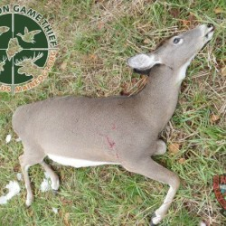 Maine Warden Service offering cash reward for poaching information