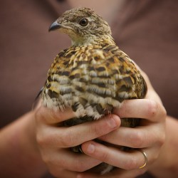 High-tech study of bird health, migration being conducted in southern Maine