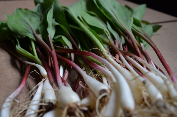 Image result for ramps wild leeks