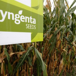 Monsanto said to have weighed deal to buy Syngenta, move tax location from US to Switzerland