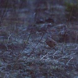 Woodcock Walk at Hirundo Wildlife Refuge
