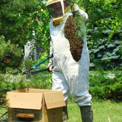 Hampden 'Bee Whisperer' expects to see surge in bee swarms as rainy weather ends