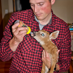 baby fawns