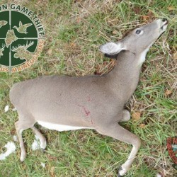 $3,000 reward offered for information on illegal deer-poaching in Ripley