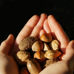 Nuts get the nutrition nod