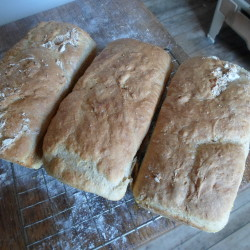 Easy oatmeal bread great for sandwiches