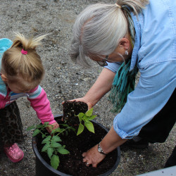 Liz Stanley from the University of Maine Cooperative Extension gets her hands dirty with two-year-old Reverie Dyer of Waldoboro while planting a Lunch Box Pepper.