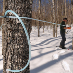 Federal grant will advance Passamaquoddy maple syrup venture