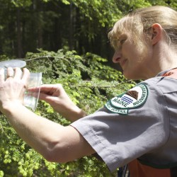 Midcoast college students researching Maine's forests before invasive pest arrives
