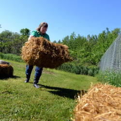 Julie Harris lines bales of straw along her fence where she is making a raised straw bale garden.