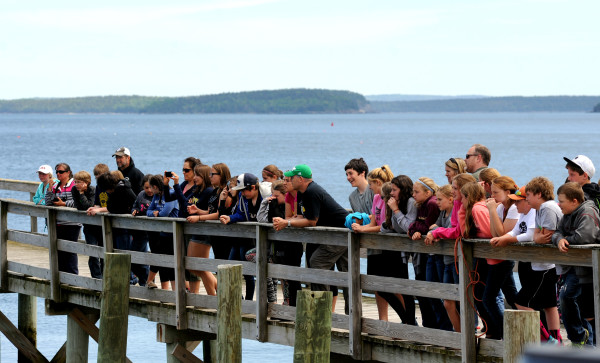 Students from Tremont Consolidated School watch as a necropsy was performed on Spinnaker, an 11-year-old humpback whale, on Monday in Hulls Cove. Spinnnaker was found on Thursday off Great Head on Mount Desert Island.
