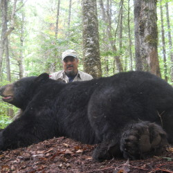 Biologists re-capture 'Big John,' a black bear featured in 2010 BDN story