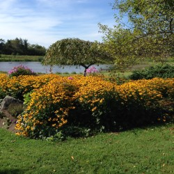 The Garden of Phyllis and Wes Daggett will provide a beautiful lunch spot by their farm pond on the July 12 tour.