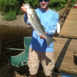 Orrington angler still catching stripers