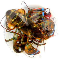 Lobster history you may not know