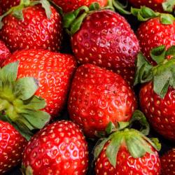 Maine strawberry season to be bountiful
