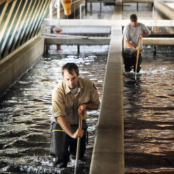 Old hatchery gets fish and a future