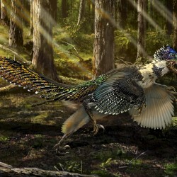 New fossil might be oldest known bird