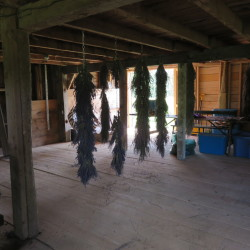 The last of Glendarragh Farm's 2014 crop hangs in an old restored barn on the property of owners Lorie and Patrick Costigan.