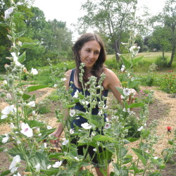 Rockport Herbalist Struggles With Fda Regulations Homestead Bangor Daily News Bdn Maine