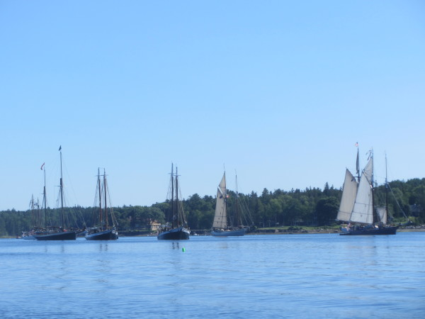 Schooners are anchored in Gilkey Harbor in preparation for the 2015 Great Schooner Race on Friday in Islesboro.
