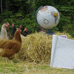 Chickens, bees and land add up to a farm