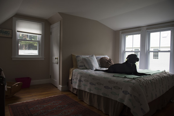 David McCarthy's black Lab, Kima, named for the drug fighting detective in &quotThe Wire,&quot sits on the bed in the room where her owner died of a heroin overdose in Falmouth, Maine. The dog has been adopted by her owner's parents.