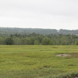 Maine farmers hope wild blueberry crop will command higher prices