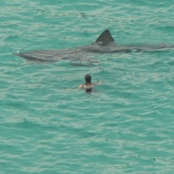 Officials investigating report of shark sighting near Wells Beach