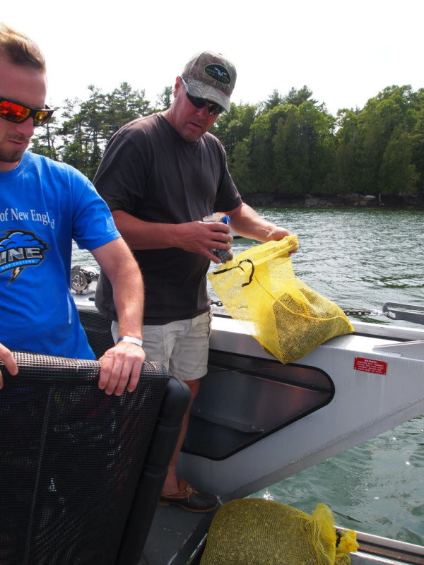 Evan Patierno of Fair Winds Inc. and Pete Valente of Quahog Bay Conservation fill oyster bags with oyster seed from Muscongus Bay Aquaculture.