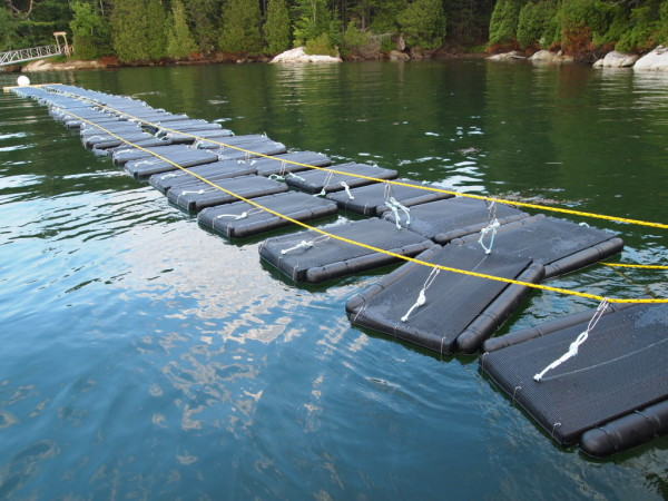 Oyster bags, filled with new baby oysters, float at a new aquaculture site off Snow Island. The bags are designed to float in place, clipped to a central line, so oysters are always sitting in the water. The bags are flipped once a week to help keep seaweed and other matter from accumulating on the bottom of the bag.