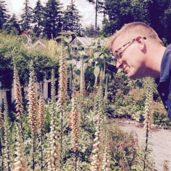 Open-Pollinated Plants for Maine Gardens