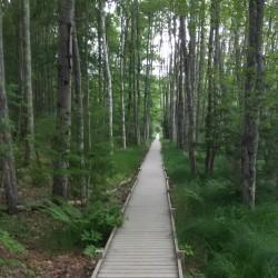Martha Stewart revels in Maine hikes