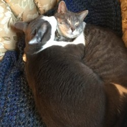 Yarmouth sisters launch holistic skin-care business from their kitchen