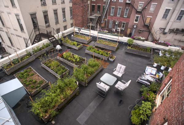 Visitors Invited To Tour Lush Garden On A Bangor Rooftop