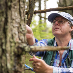Pam Wells cores a tree during the 25th annual North American Dendroecological Fieldweek in Acadia National Park in June. The program focused on the science of tree ring dating.