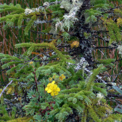 Spell of the Yukon remains strong