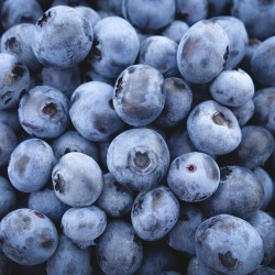 Wild Blueberry Festival to feature public wedding of two organizers of the event