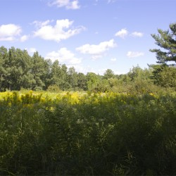 Hike: Hirundo Wildlife Preserve