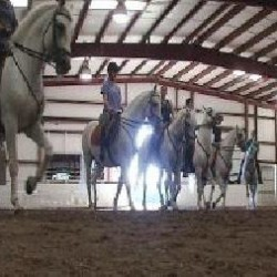 Veterans Moving Ahead with Horses