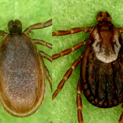 The Business Of Ticks