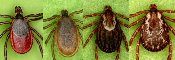 These chemicals will kill the ticks in your yard — Outdoors — Bangor