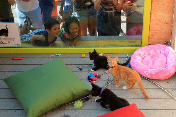 Kittens ramble around in a wooden pen set up in Congress Square Park Wednesday. The pen had a window where passersby could stop, look and take photos. Visitors were asked to use the hashtag #kittensinCSP (for kittens in Congress Square Park) in social media posts.