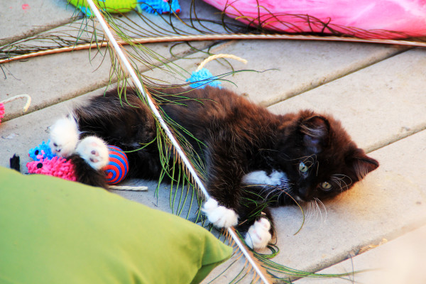 A kitten rests amid a group of cat toys.