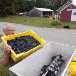 Blueberry wine makers win contest