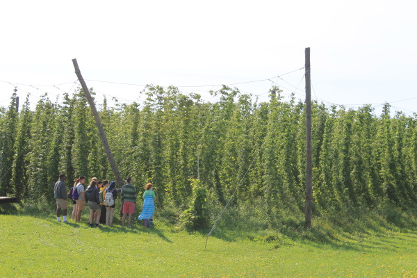 A group of Bowdoin College students stand at the edge of Aroostook Hops' 1-acre plot on Aug. 28 in Westfield.