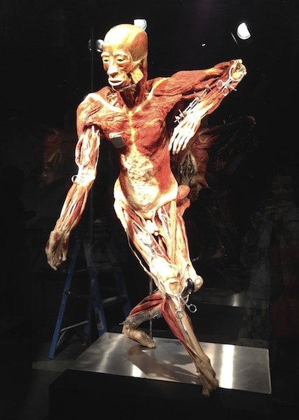 The human body exposed at new Portland Science Center