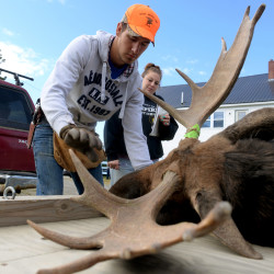 Moose hunt gives Mainers unique opportunity to lend a hand