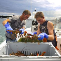 Marine experts: Gulf of Maine has become a cod-forsaken place, endangering all fisheries