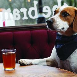 Business organizes free pet wellness checkups at Animal Refuge League fundraiser